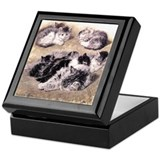 A STUDY OF CATS Keepsake Box