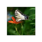 .swallowtail on candy lily. Square Sticker 3
