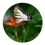 .swallowtail on candy lily. Round Car Magnet