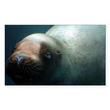 Steller sea lion.jpg Decal