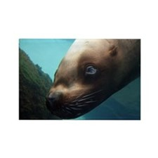 Steller sea lion 6.jpg Rectangle Magnet