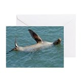 Waving Harbor Seal Cards (Pk of 10)