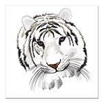 White Tiger Large Poster Square Car Magnet 3
