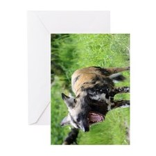 African wild dog 6.jpg Greeting Cards (Pk of 10)
