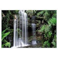 Rainforest, Mt. Field National Park, Tasmania, Aus