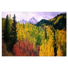 Trees on a landscape, San Juan Mountains, Colorado