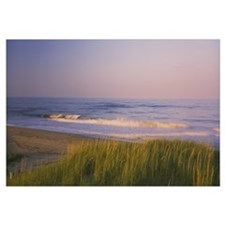 Marram grass on the beach, Parker River National W