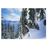 Snow covered trees on mountainside, Lake Tahoe, Ne