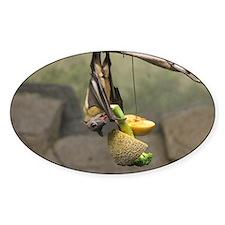 Straw-colored fruit bat 5.jpg Decal