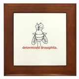Determined Drosophila Framed Tile