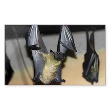 Straw-colored fruit bat 9.jpg Decal
