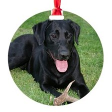 Black Lab Storm Ornament (Round)