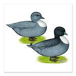 "Blue Call Ducks Square Car Magnet 3"" x 3&quot"
