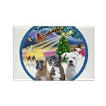 Xmas Magic / 3 Boxers Rectangle Magnet (10 pack)