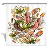 Ernst Haeckel nepenthaceae Print Shower Curtain