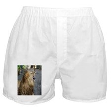 Smiling Lion Boxer Shorts