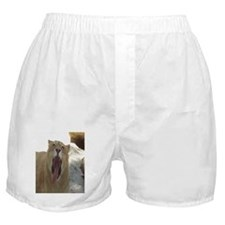 Lioness Boxer Shorts