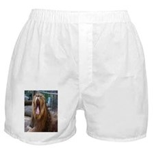 Lion Yawning Boxer Shorts
