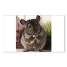 lovely chinchilla Bumper Stickers