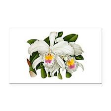 Orchid Warner 1882 Cattleya Labiatax_copy.png Rect