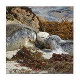 Harbor Seal Mom Kisses Pup Tile Coaster
