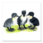 "Blue Swedish Ducklings Square Car Magnet 3"" x"