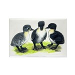 Blue Swedish Ducklings Rectangle Magnet (10 pack)