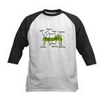 Grasshopper Anatomy Gails.PNG Kids Baseball Jersey