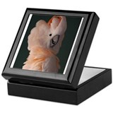 Moluccan Cockatoo Keepsake Box