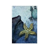 The Book of Mermaids Star, Fin and Turtle Magnet