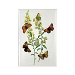 Butterflies of Summer Rectangle Magnet (10 pack)