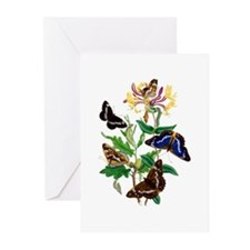 Butterflies and Honeysuc Greeting Cards (Pk of 20)