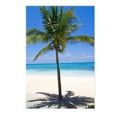 Bahamas Palm Postcards (Package of 8)