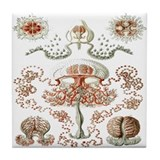 Ernest Haeckel's Anthomedusea Tile Coaster