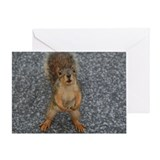Squirrel Fiend - Greeting Card