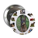 Belgian Malinois - Beauty, Brains and Versatility