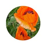"oriental poppy, roter Mohn 3.5"" Button"
