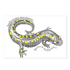 Unique Salamander Postcards (Package of 8)