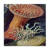 Ernst Haeckel Actiniae 6th Mural Tile