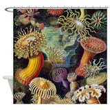 Ernst Haeckel Sea Anemones Shower Curtain
