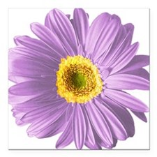 "pop-daisy_pu.png Square Car Magnet 3"" x 3"""