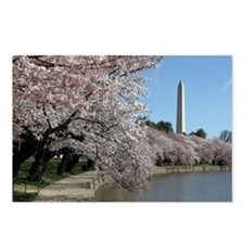 Peal bloom cherry blossom frames Washington Monume