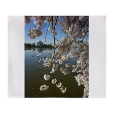 Seagulls Fly Under Peal bloom cherry blossom surr
