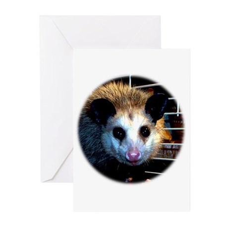 The Opossum Greeting Cards (Pk of 10)