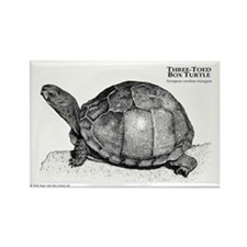 Three-Toed Box Turtle Rectangle Magnet (10 pack)