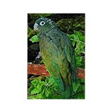 Pionus Art Rectangle Magnet