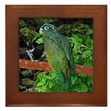 Pionus Art Framed Tile