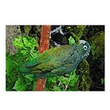 Pionus Art Postcards (Package of 8)