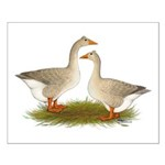Tufted Buff Geese Small Poster