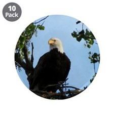 "Bald Eagle in Tree with Sky 3.5"" Button (10 pack)"